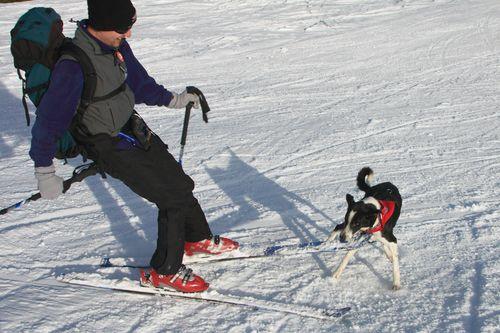 Hund (rechts) mit Beute