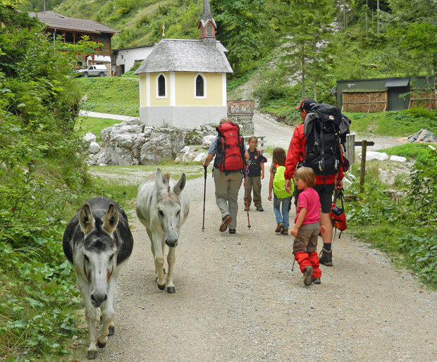 Begegnung mit Eseln