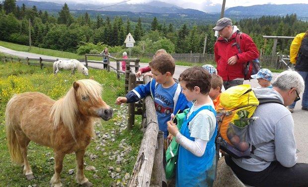 Pferdchen am Taubenberghaus