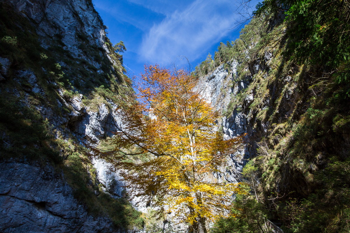 Herbst am Fels