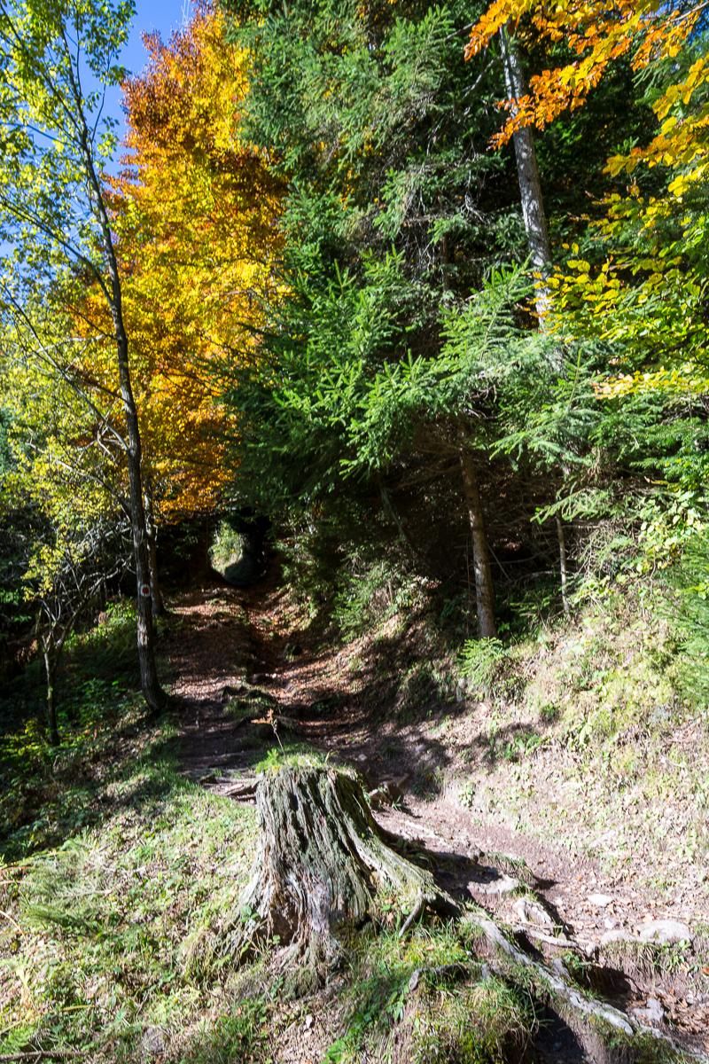 Tunnelblick am Minzweg